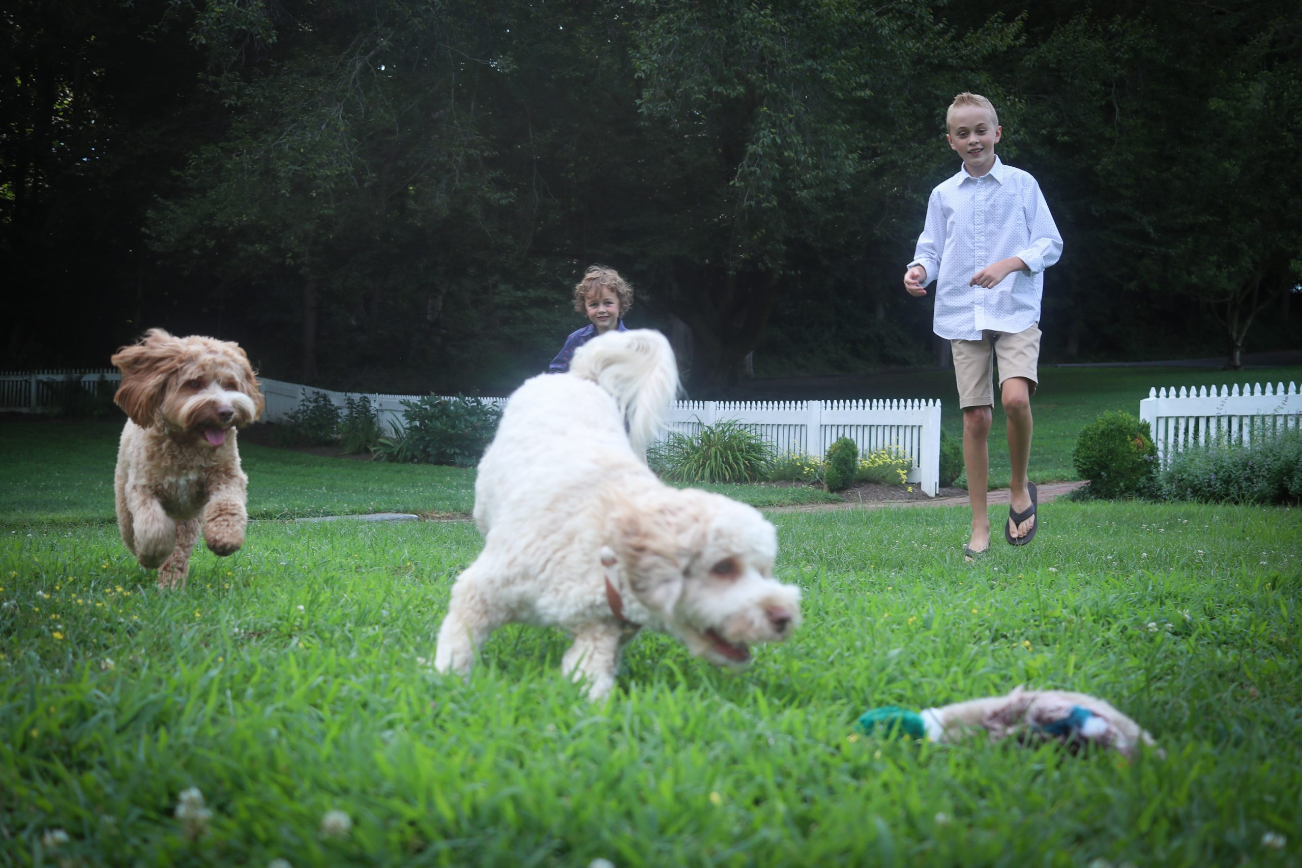 family playing with grown Australian labradoodles